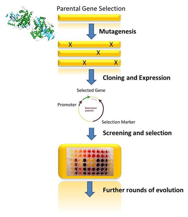 Biocatalysis Figure 2